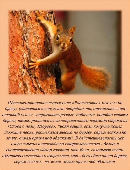 1465115595_www.radionetplus.ru-5 (537x700, 382Kb)