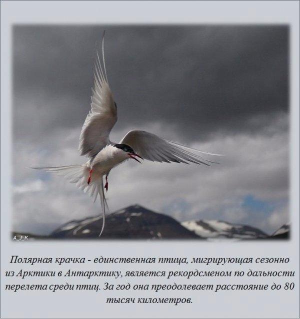 1465115602_www.radionetplus.ru-7 (600x639, 169Kb)