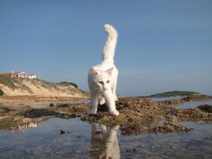 кошачий пляж на сардинии 1 (700x525, 263Kb)