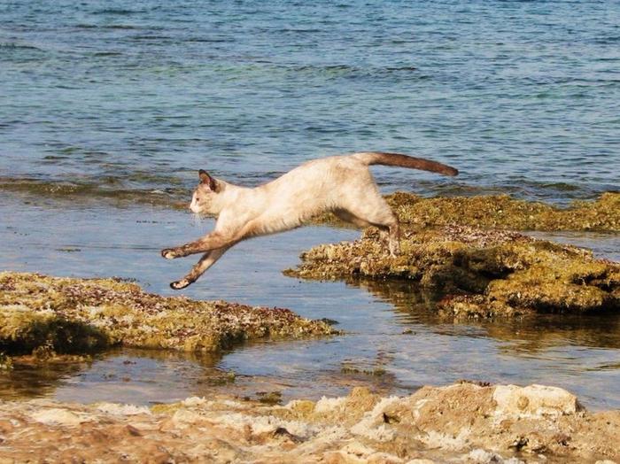 кошачий пляж на сардинии 4 (700x524, 461Kb)
