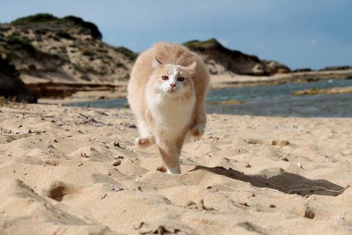 кошачий пляж на сардинии 6 (700x466, 281Kb)