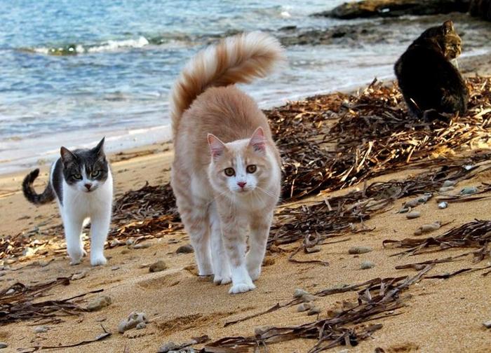 кошачий пляж на сардинии 7 (700x504, 429Kb)