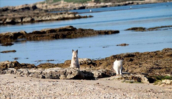 кошачий пляж на сардинии 11 (700x403, 348Kb)