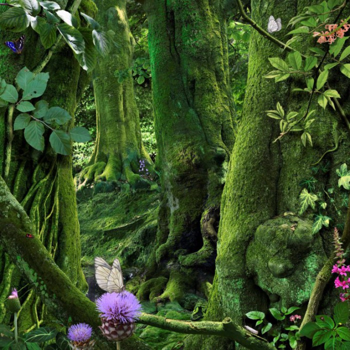 чудо лес 4 (3) (700x700, 627Kb)