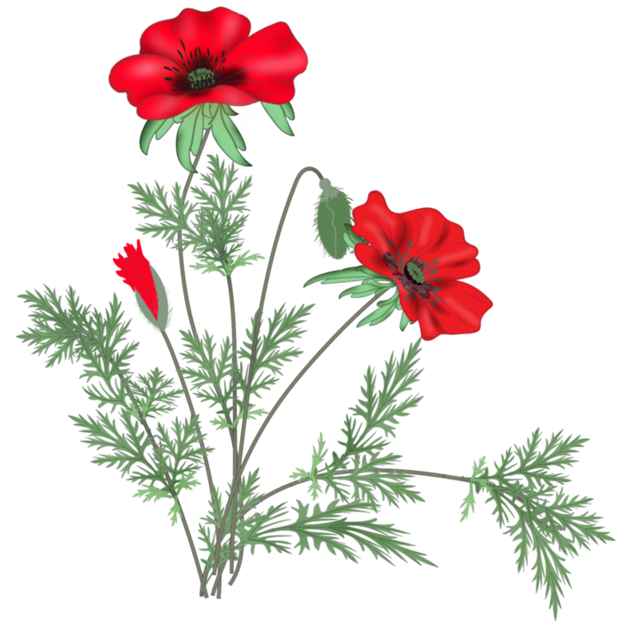 2310 poppies21142330 (700x698, 454Kb)