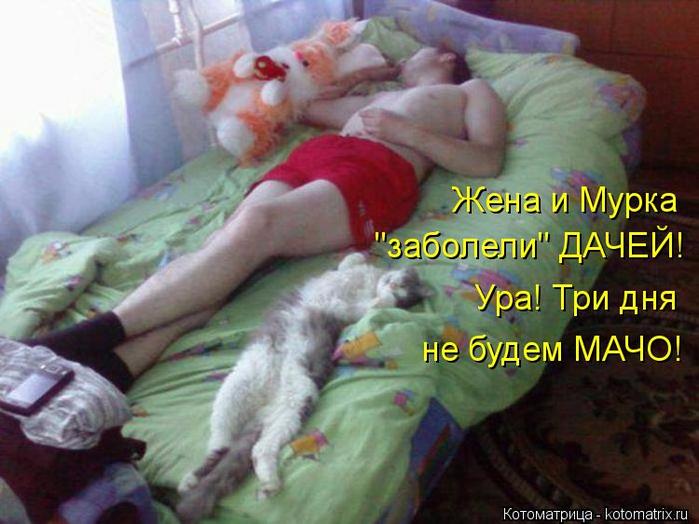 kotomatritsa_J6 (700x524, 381Kb)