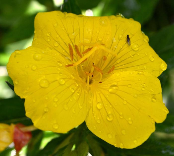 16 06 2016 огород, цветы 045 (700x627, 447Kb)
