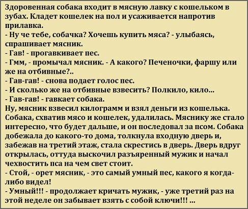3925311_anekdot_pro_sobaky (487x411, 87Kb)