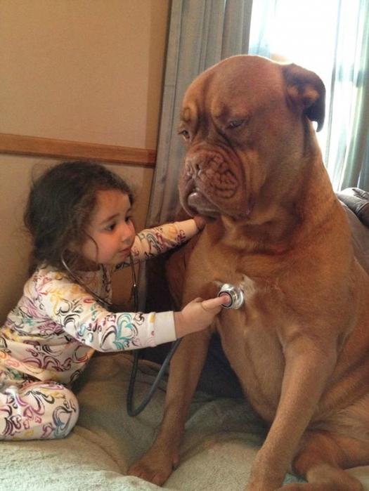 8730110-R3L8T8D-650-7172010-R3L8T8D-650-cute-big-dogs-and-babies-17[1] (525x700, 345Kb)