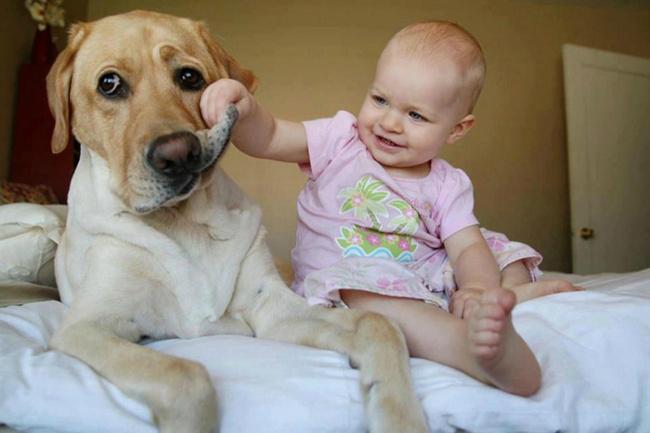 8731360-R3L8T8D-650-top-15-des-bebes-avec-leurs-grands-chiens-85846[1] (650x433, 185Kb)