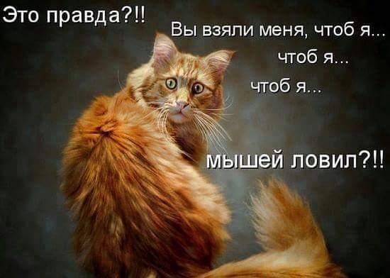 FB_IMG_1466238077013 (550x392, 26Kb)
