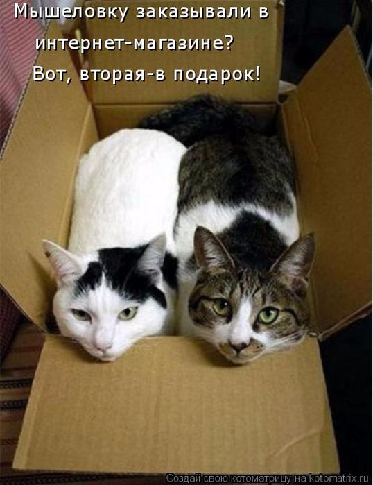 kotomatritsa_n (538x700, 299Kb)