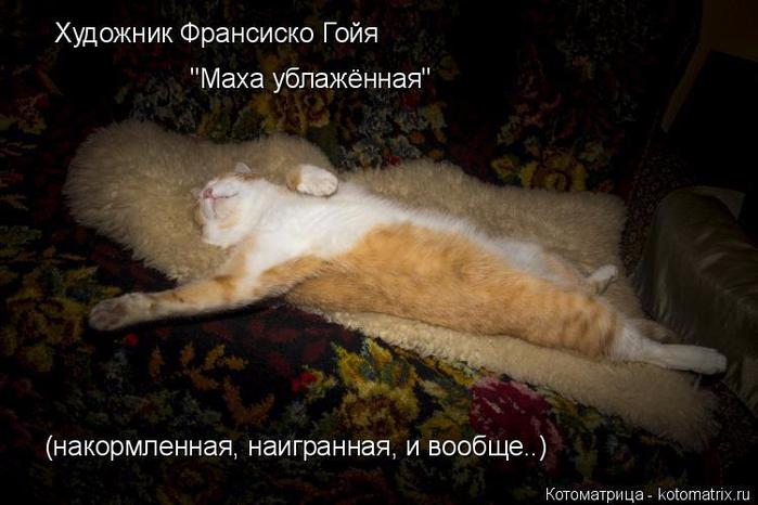 kotomatritsa_B (700x466, 309Kb)