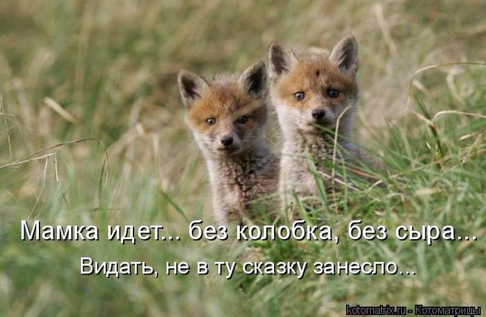 kotomatritsa_k5 (700x456, 324Kb)