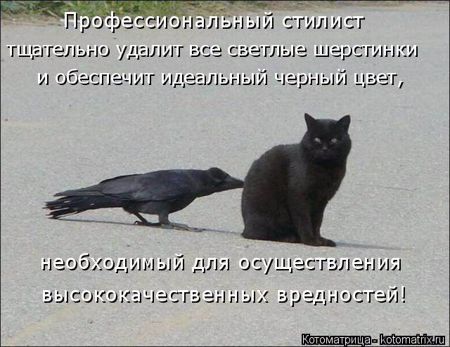 kotomatritsa_NR (640x494, 213Kb)