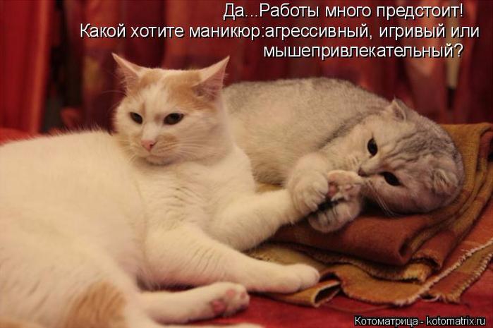 kotomatritsa_T (700x465, 293Kb)