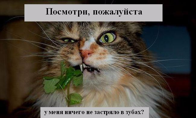 radionetplus_ru_misli21 (650x390, 173Kb)