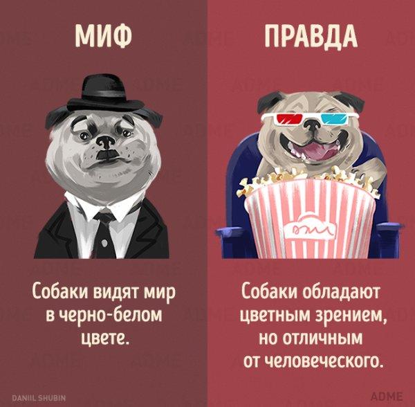 1466278433_mify-o-zhivotnyh-1 (600x588, 52Kb)