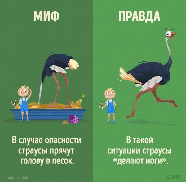 1466278339_mify-o-zhivotnyh-3 (600x588, 40Kb)