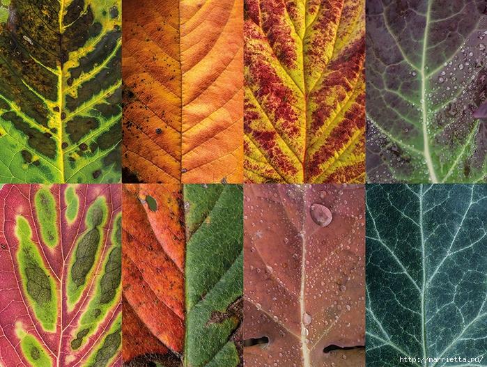 Волшебные краски осенних листьев (2) (700x527, 462Kb)