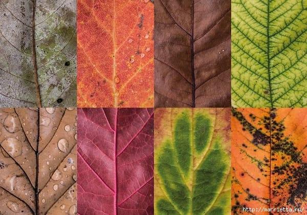 Волшебные краски осенних листьев (6) (600x420, 185Kb)