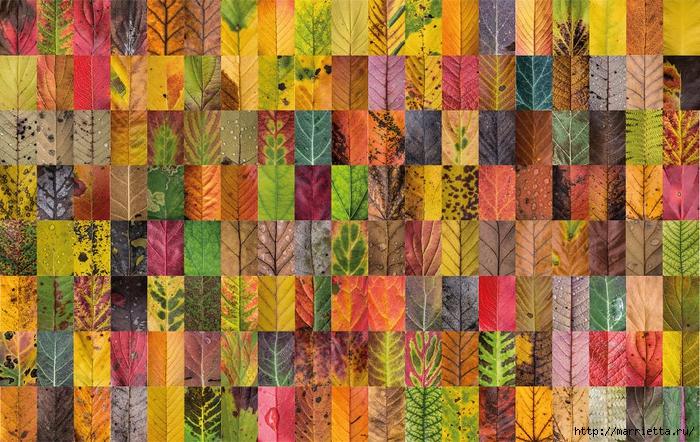 Волшебные краски осенних листьев (8) (700x442, 391Kb)