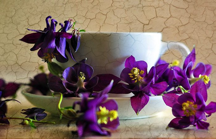 98600__purple-flowers-and-white-cup_p (700x452, 72Kb)