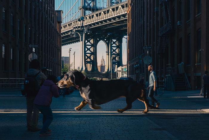 mitch-boyer-vivian-the-giant-wiener-dog-etoday-04 (700x467, 418Kb)