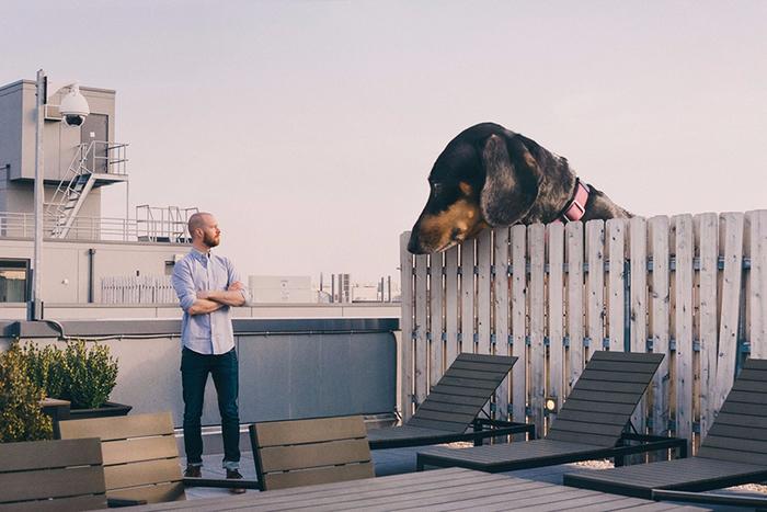 mitch-boyer-vivian-the-giant-wiener-dog-etoday-05 (700x467, 341Kb)
