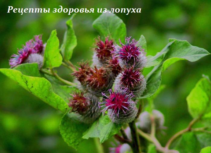 2749438_recepti_zdorovya_iz_lopyha (700x506, 504Kb)