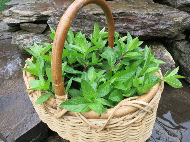 Mint-in-basket-reduced (640x480, 146Kb)