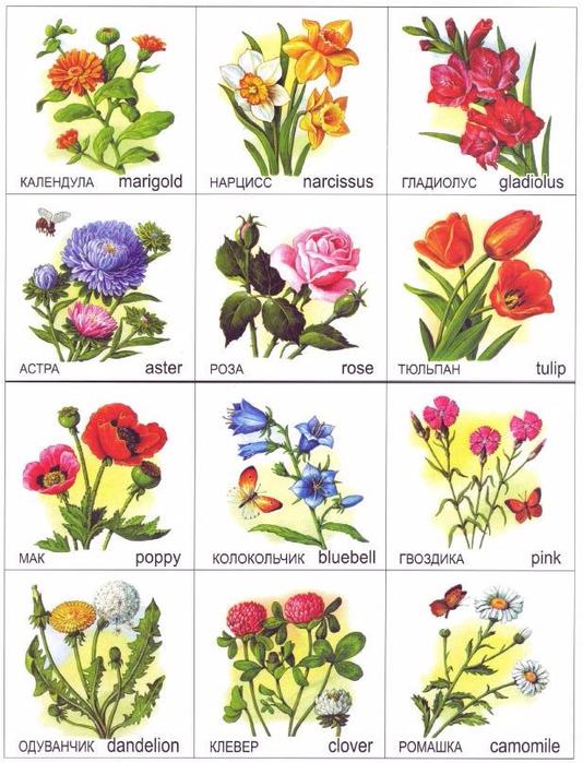 Крупноцветущие цветы