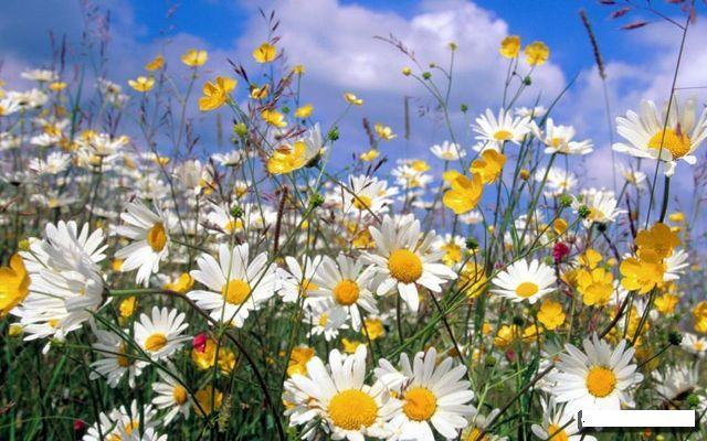 1311261933_wild-flowers_019 (640x400, 63Kb)