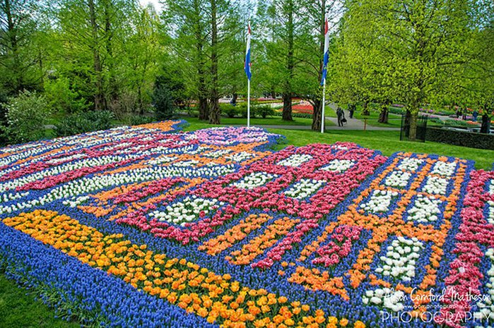46_Keukenhof_Netherlands_1_Picture with flowers (700x465, 166Kb)