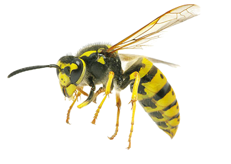 4709286_bees (452x321, 102Kb)