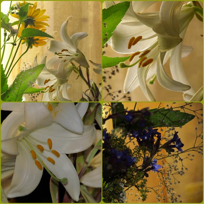 collage лилии (700x700, 641Kb)