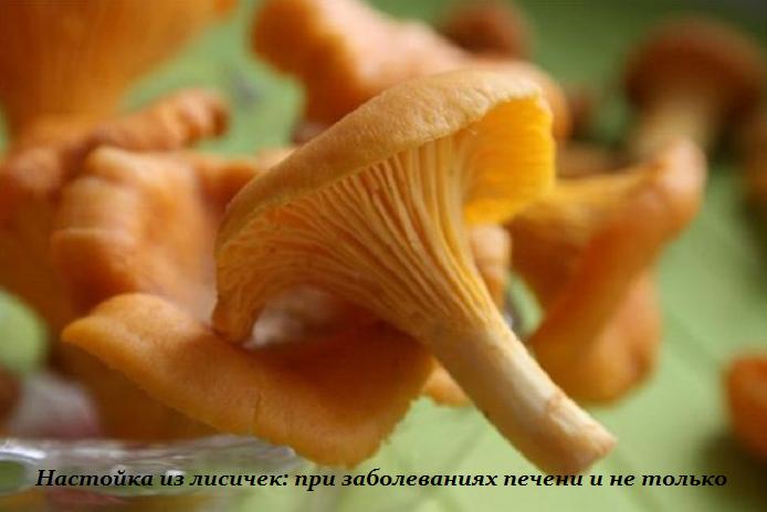 2749438_Nastoika_iz_lisichek (694x463, 374Kb)