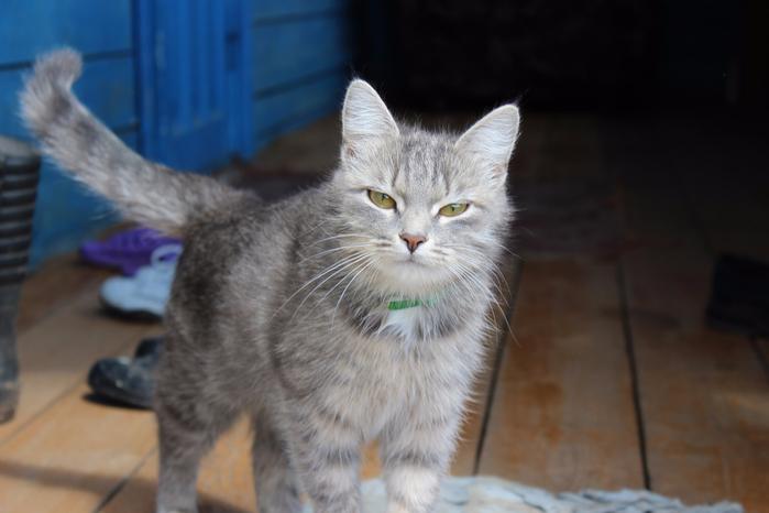 кошка (700x466, 268Kb)