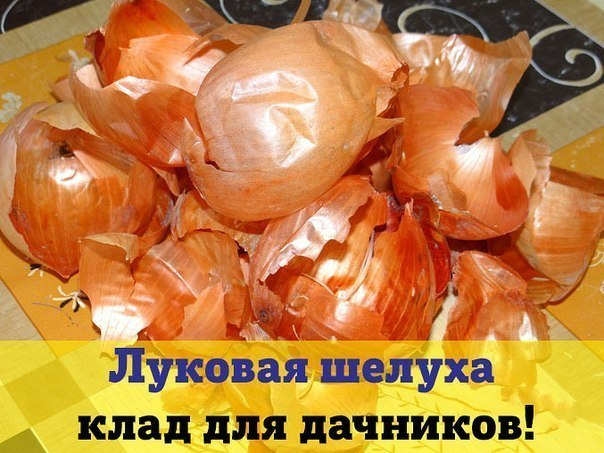 3879419_10_1_ (604x453, 78Kb)