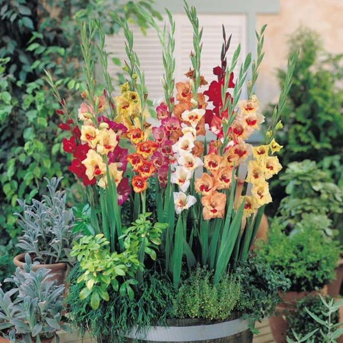 4080226_gladiolus04 (700x700, 159Kb)