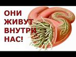 Превью KgpeEpK0pec (480x360, 99Kb)