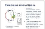 ������ imagestabletki-ot-ostrits-u-vzroslyh-thumb (580x382, 100Kb)