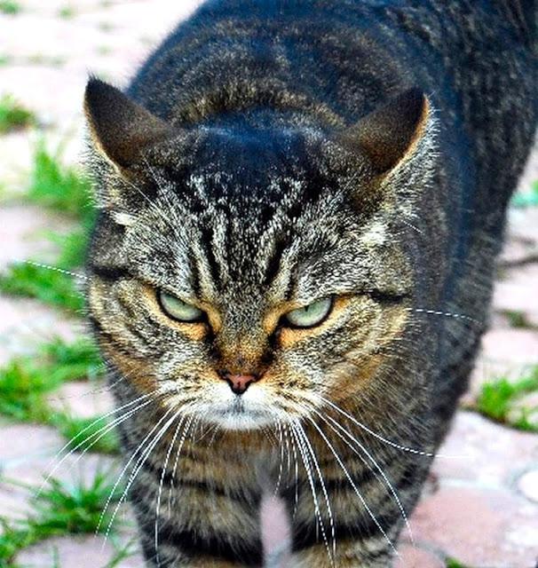 про котов3 (606x640, 140Kb)