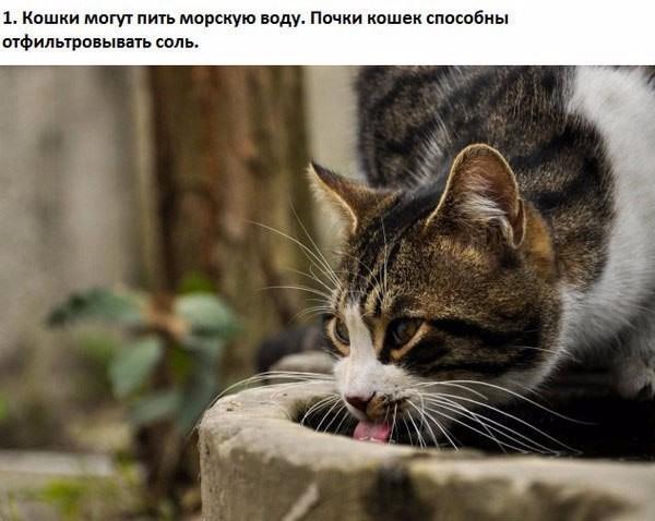 10 интересных фактов о кошках (600x478, 223Kb)