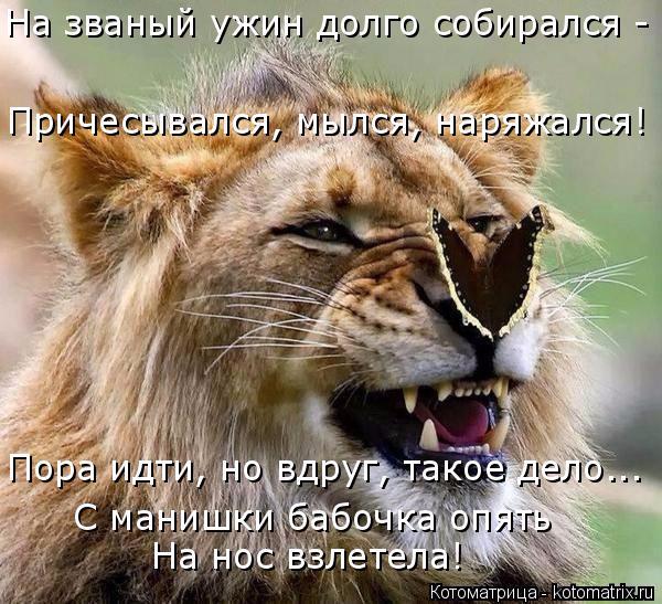 kotomatritsa_- (600x547, 352Kb)