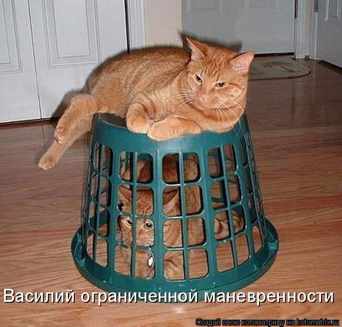 kotomatritsa__ (700x669, 437Kb)