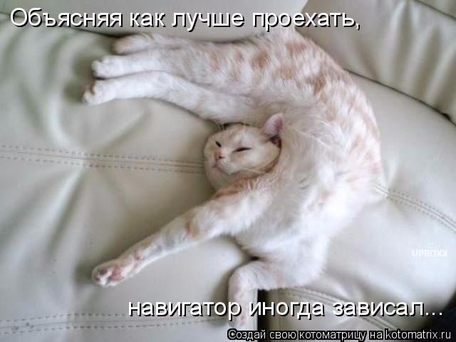 kotomatritsa_3 (640x480, 174Kb)