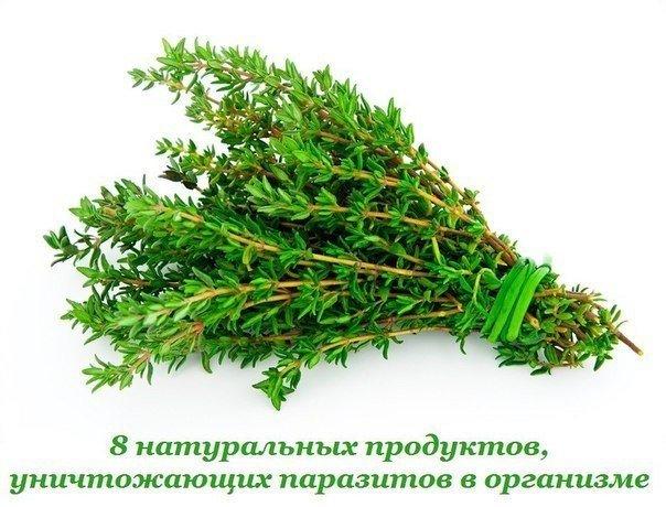 2749438_8_natyralnih_prodyktov_ynichtojaushih_parazitov_v_organizme (604x460, 66Kb)