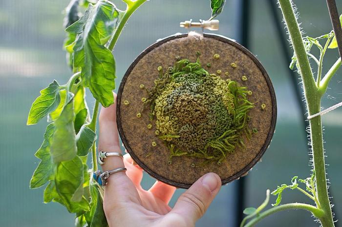 декоративный мох Эмма Мэттсон 3 (700x465, 392Kb)