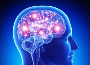 что полезно мозгу/1259869_mozg (300x217, 19Kb)